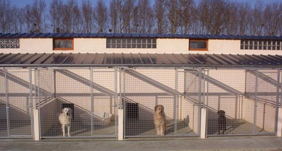 Pension chien somme picardie